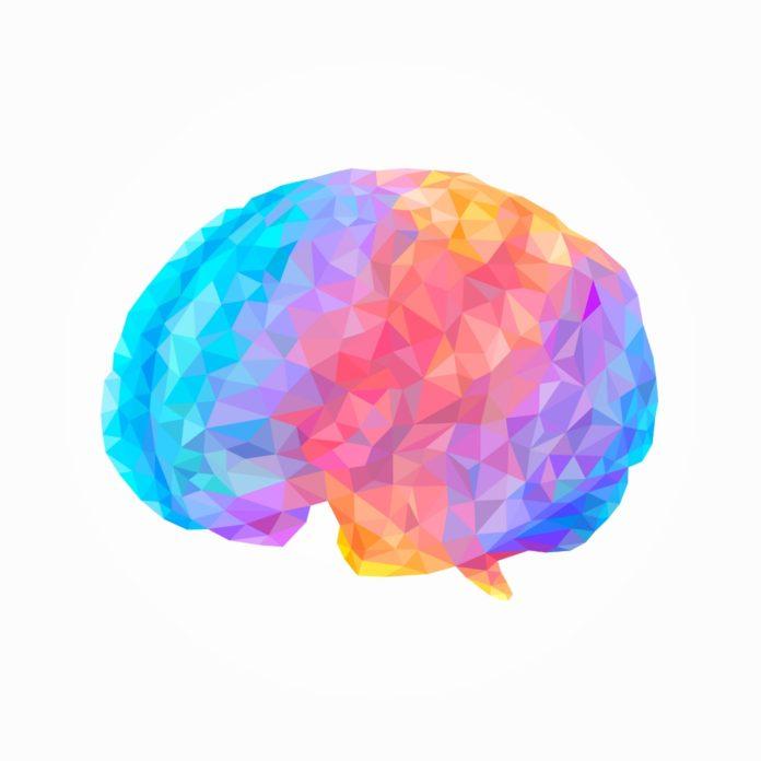 Curso capacitação On-line Neurociência e a complexidade cerebral